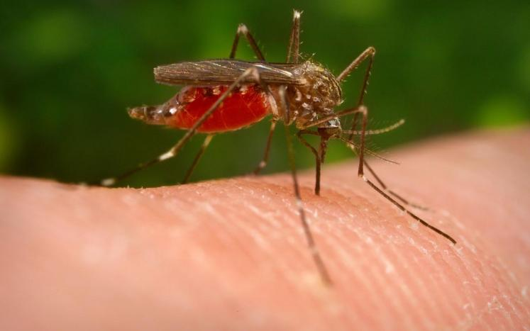 West Nile Virus (WNV) Case Confirmed Here in Worcester County