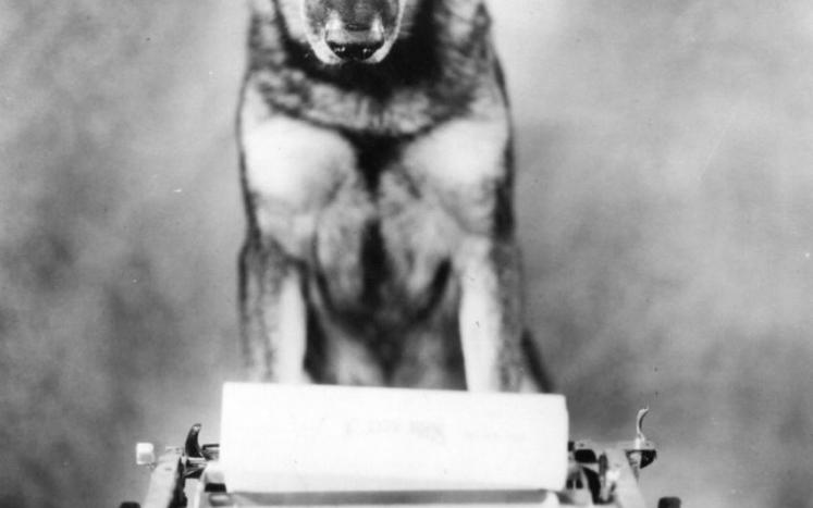 Rin Tin Tin types out a message to residents of Berlin - Renew your Dog Licenses NOW!